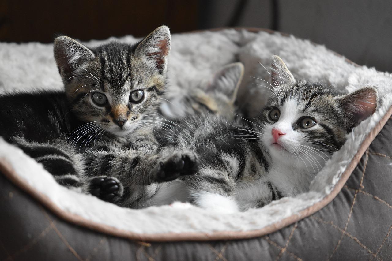 17 TOP ciekawostek o kotach